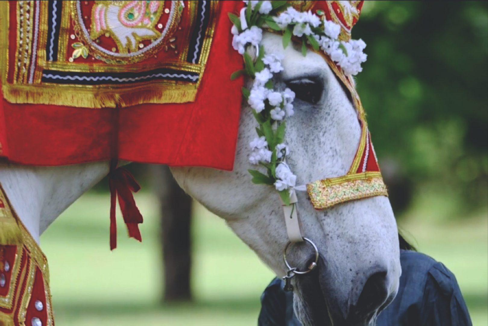 Bride Series: Don't Skip the Wedding Videographer