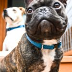 Brandless Collars are the Best Dog Collars on the Market Right Now