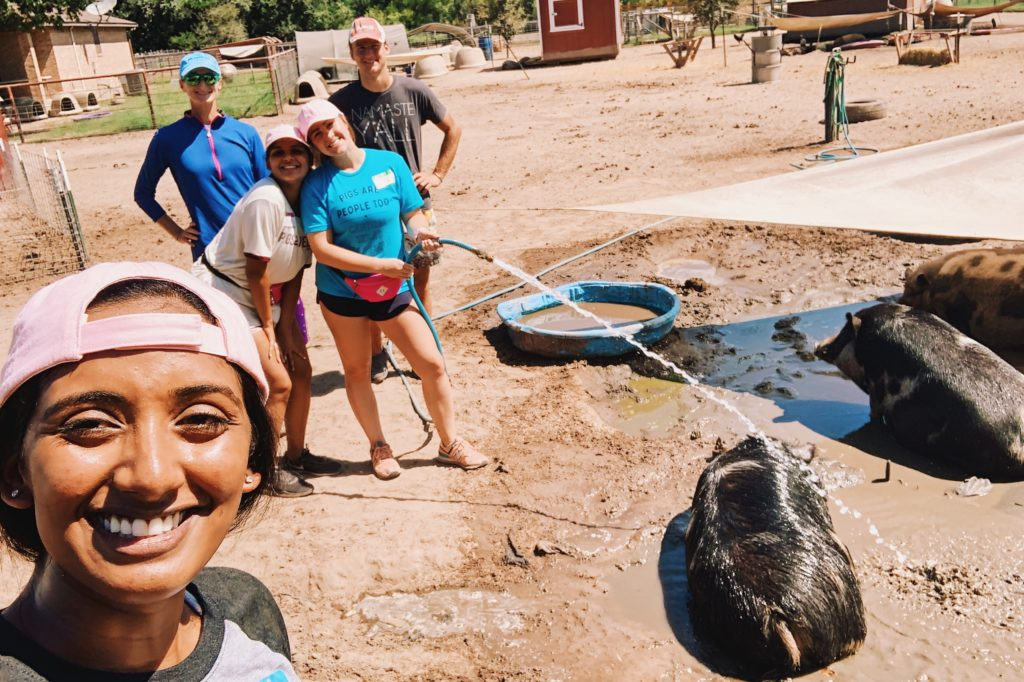 Volunteering with Central Texas Pig Rescue and Why Generosity Breeds Optimism