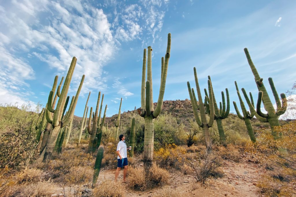 Things To Do At Or Nearby Dove Mountain